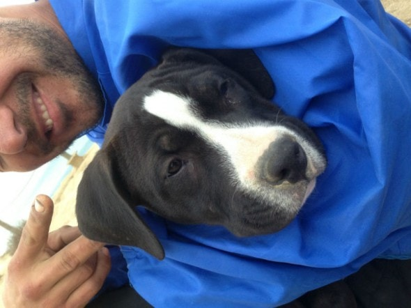Pit bull puppy rescued from Torrey Pines Cliff.