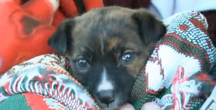 MO Animal Rescue Saves Puppies from Cold Weather