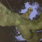 Odd News: Dog Gets Stuck In Tree
