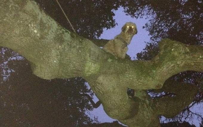 Odd News: Dog Gets Stuck In Tree