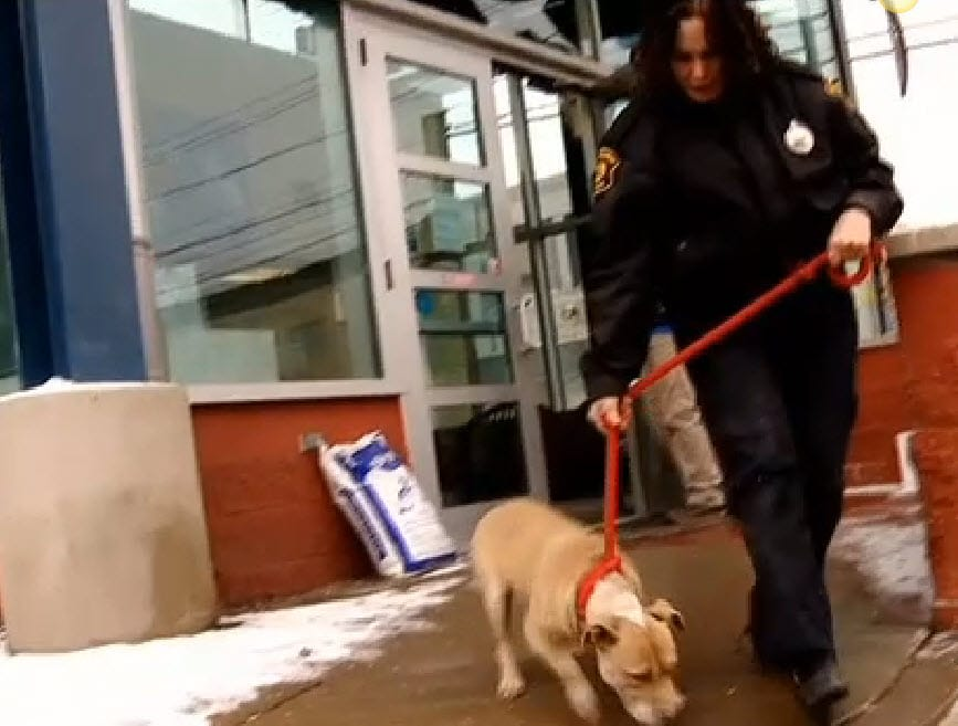 Police Rescue 6 Dogs Chained Out in the Cold