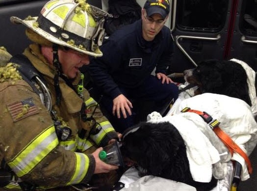Firefighter Lieutenant Rick Trudeau with two of the four dogs rushed to a vet clinic after being rescued from the fire.