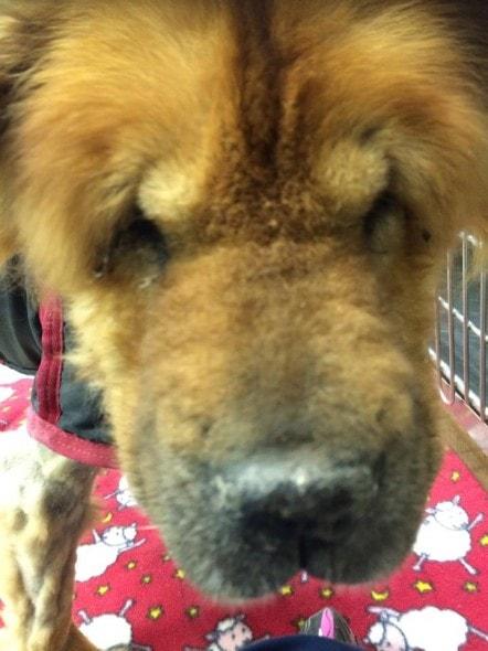 Photo Credit: Riverside Veterinary Group/Riverside Animal Hospital