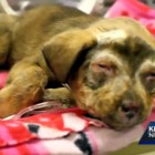 Animal Rescue Group Saves Three Puppies from Horrible Abuse