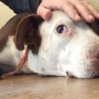 Ginger: Sad Dog Dumped by Her Owner is Rescued