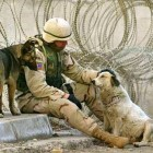 Woman Reunites Soldiers with Their Dogs