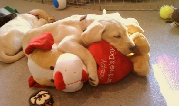2.14.14 - Valentine Dogs11
