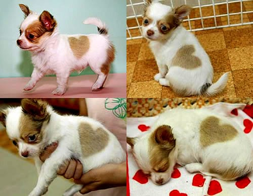 2.14.14 - Valentine Dogs12