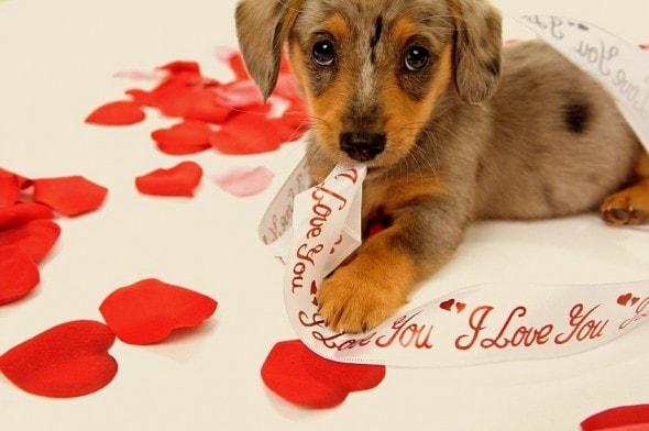 2.14.14 - Valentine Dogs18