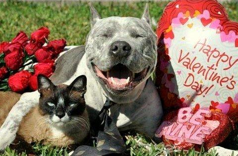 2.14.14 - Valentine Dogs19