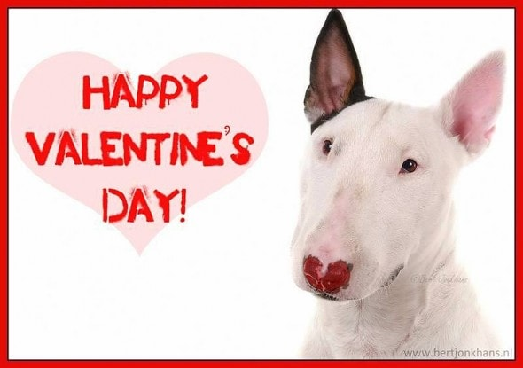 2.14.14 - Valentine Dogs2