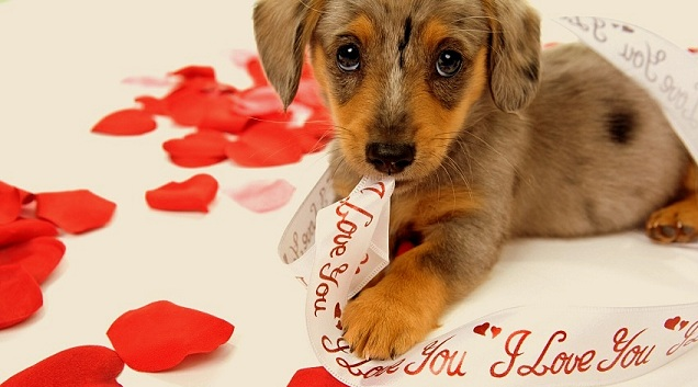 20 best valentine 39 s day photos life with dogs - Valentines day pictures with puppies ...