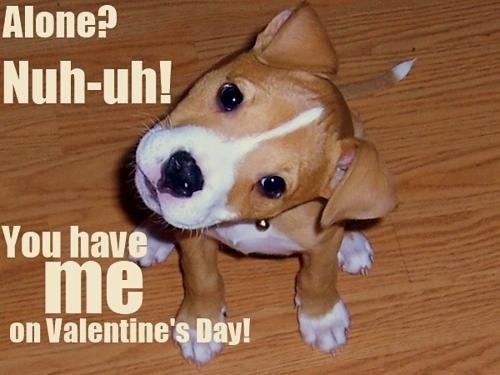 2.14.14 - Valentine Dogs4