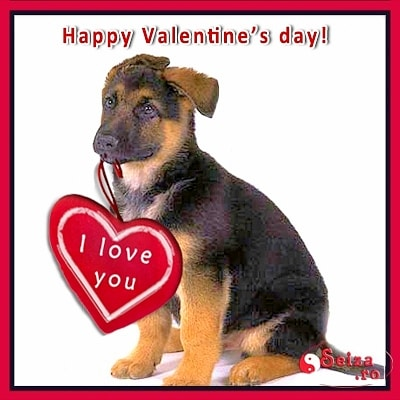 Best Dog Food For Labs >> 20 Best Valentine's Day Photos - LIFE WITH DOGS