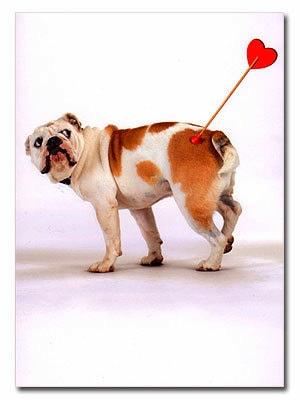 2.14.14 - Valentine Dogs8