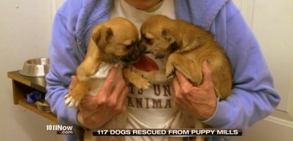 2.20.14 - 100 SD Puppy Mill Dogs Saved