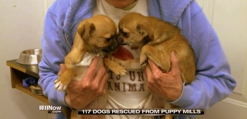 Over 100 Dogs Rescued from South Dakota Puppy Mills