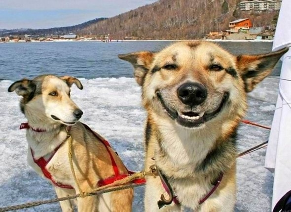 2.20.14 - Smiling Dogs1