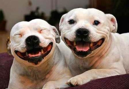 Smiliest Dogs Ever!