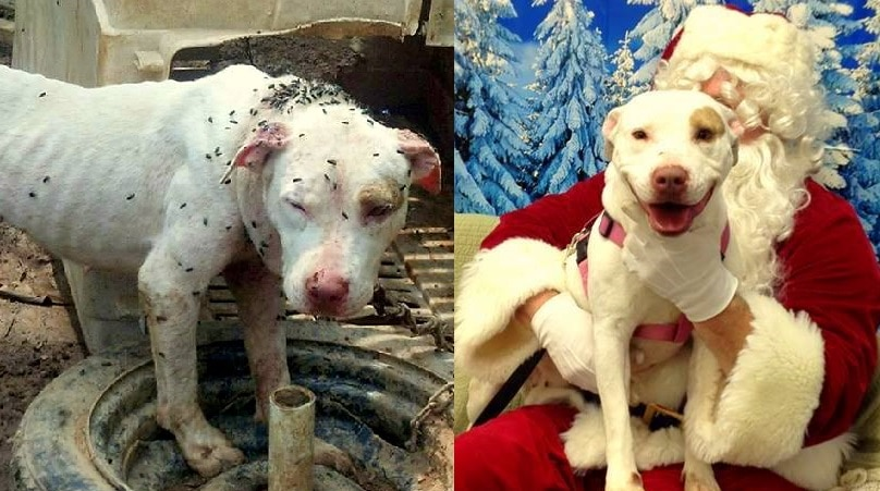 Dog Rescued from Life on a One-Foot Chain