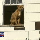 Starving Dog Rescued After Being Spotted on Roof