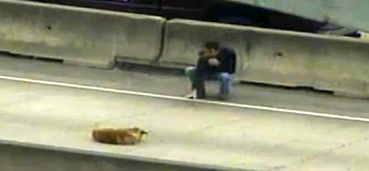 Heroic Man Rescues Dying Dog from Houston Highway