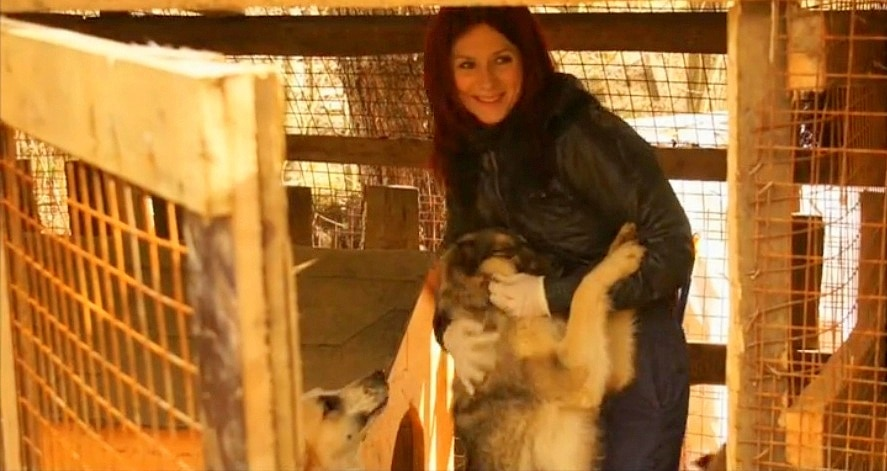 Animal Lovers Save Street Dogs from Sochi's Culling Program