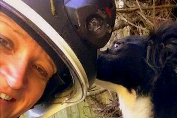 Miracle Dog Rescued from Rubble 48 Hours After Explosion