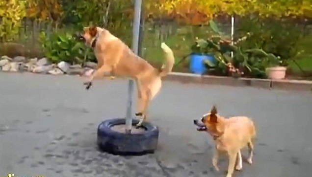 Funny Dogs Doing Silly Things