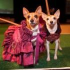 Fashion Show to Benefit Senior Dogs