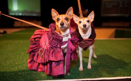 Fashion Show to Benefit Senior Dogs