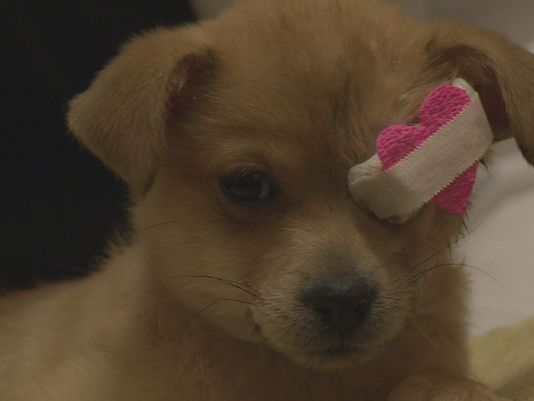 Puppy Rescued from a Trash Can in Need of a Good Home