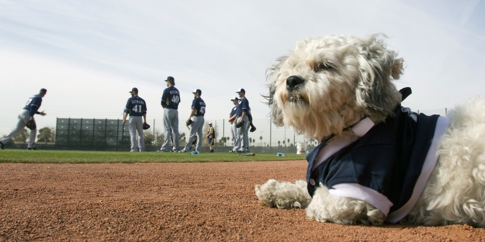 Stray Dog Finds Home with Professional Baseball Team