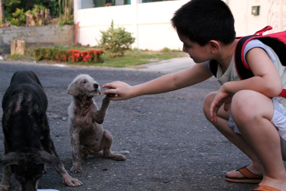Young Boy Helping to Save Stray Animals