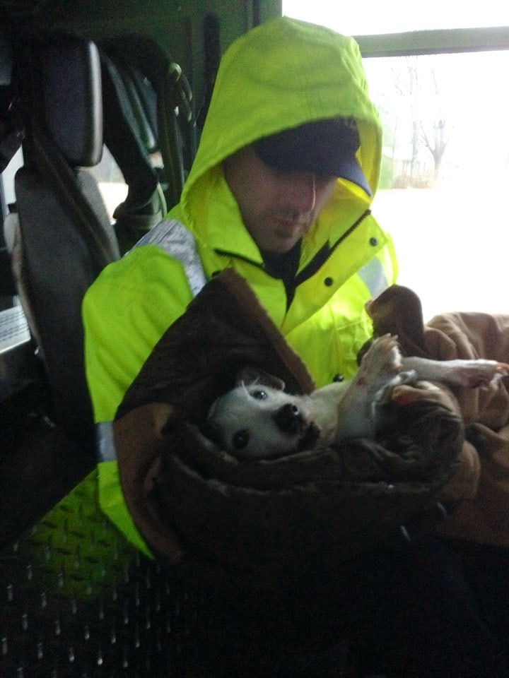 Firefighters Save Injured Dog from Car Accident