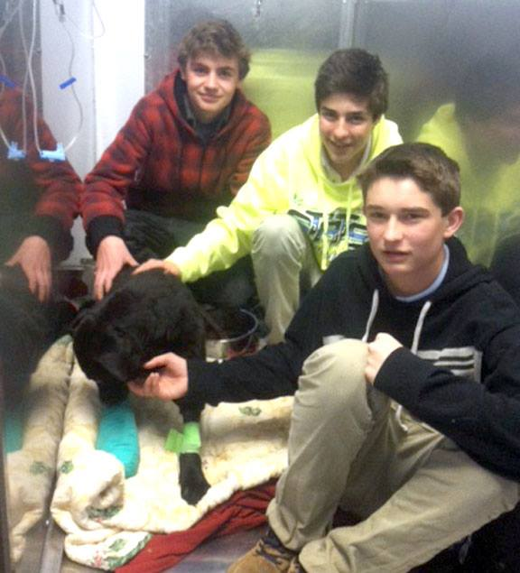 Teenage Boys Save Injured Dog