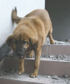 Dog Save Depressed Girl from Committing Suicide