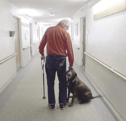 Stray Dog Gets a Second Chance at a Nursing Home