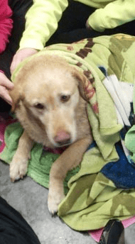 Four Junior High School Girls Save Dog
