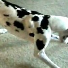 Dogs Chasing Laser Pointers Compilation
