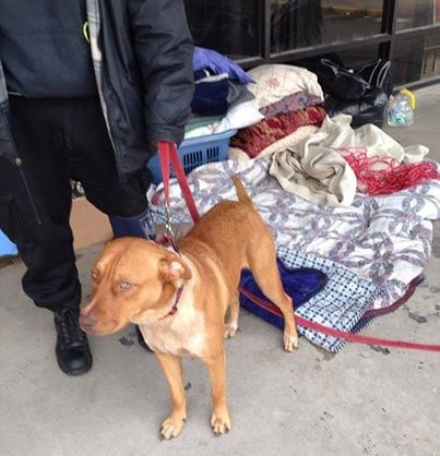 Animal Rescue Group Helps Homeless Family and Their Pets