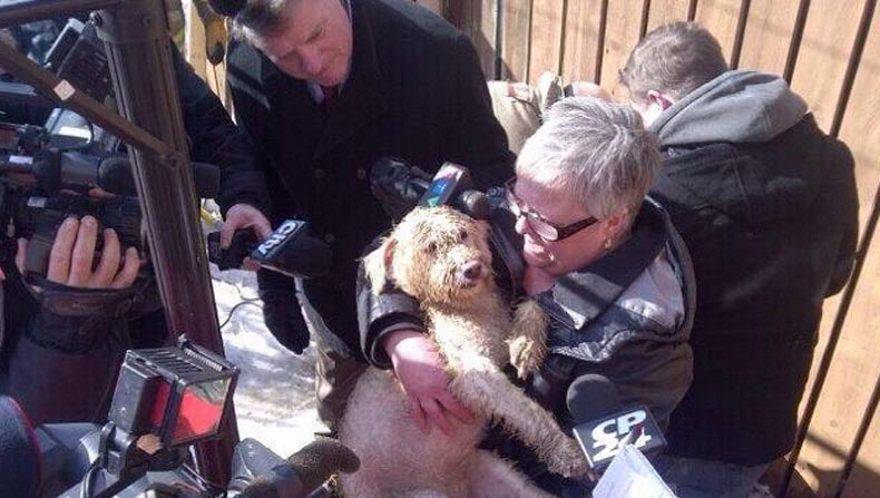 Missing Dog is Found in Septic Tank