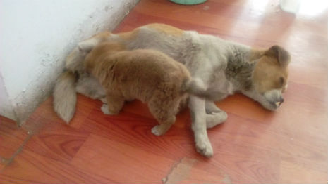 UPDATE: Shi Bao, the Two-Legged Dog and Her Puppies Get Rescued
