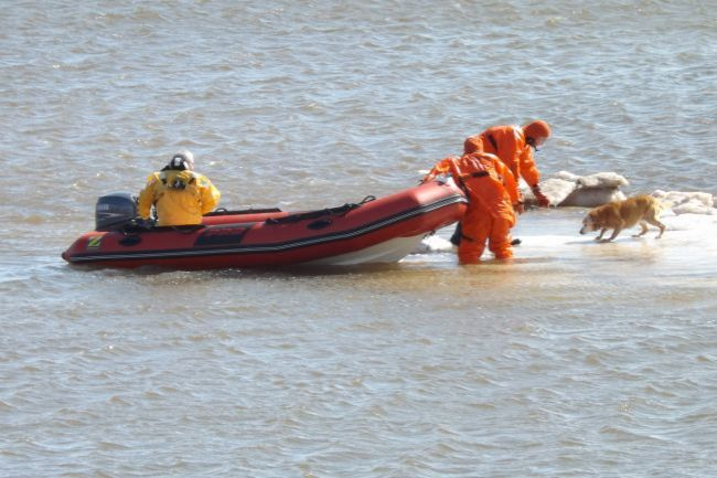 Canadian Firefighters Rescue Golden Retriever from Icy River