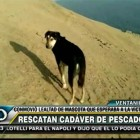 Loyal Dog Waits Hours by the Beach for His Owner's Return