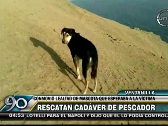 Loyal pet waiting for his owner. Photo Credit: 90 segundos/Frecuencia Latina