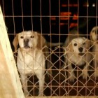 """Guardians of Rescue Help the 11 """"Dogs Left in a Box"""""""