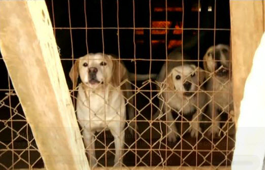 Guardians of Rescue provided adequate housing for 11 dogs from Wythe County, Va.
