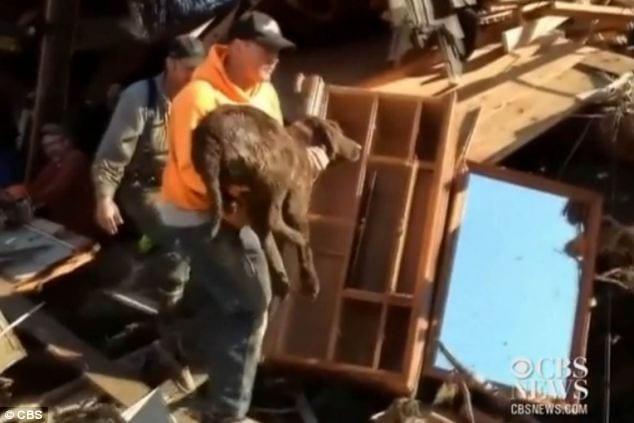 Family Pet Gets Rescued After Surviving Mudslide