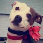 Three Rescued Dogs Need New Homes by End of March